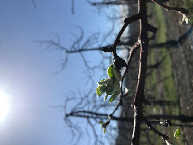 春、開花!